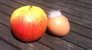 """""""Apfel und Ei"""" – Nachspielzeit"""